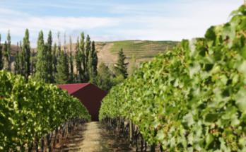 Terra Sancta winery
