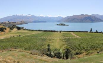 Rippon vineyard Wanaka