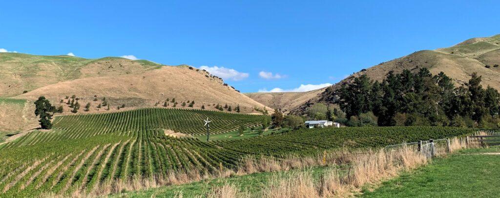 Wrekin vineyard