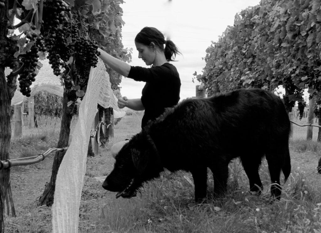 Julianne Brogden in the vineyard