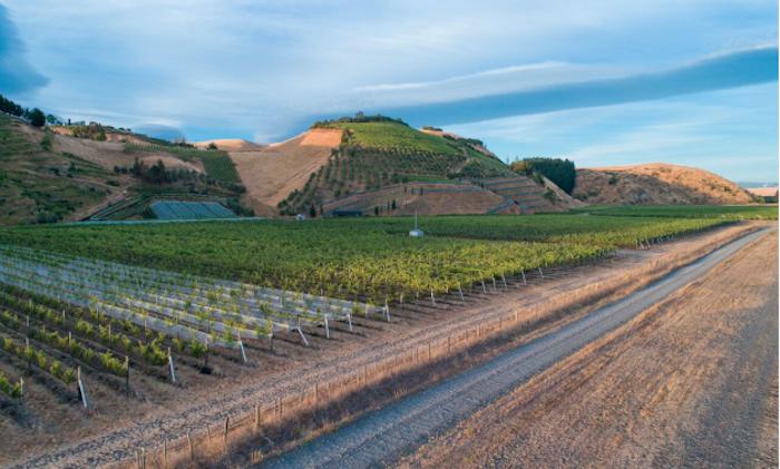Stonecroft vineyard