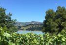 Whistling Buoy vineyard