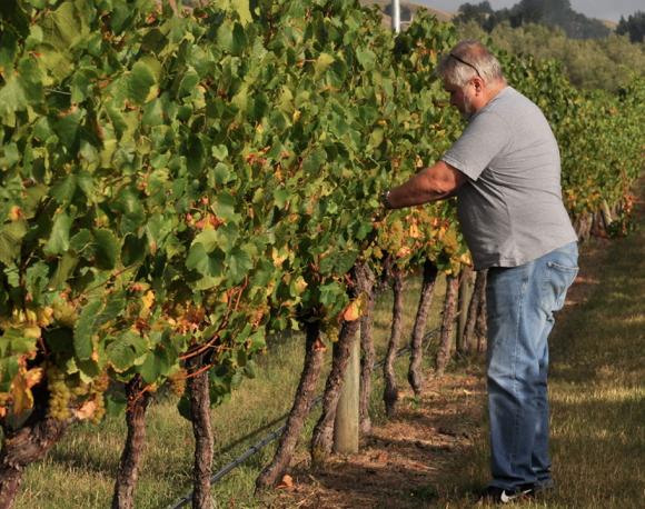 John Hancock in vineyard