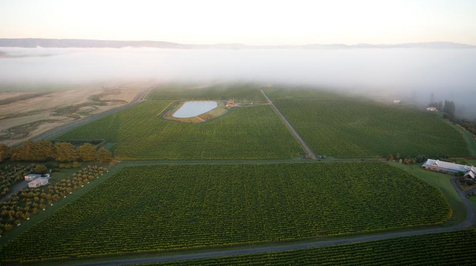 Osawa vineyard