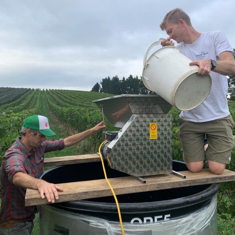 Greystone Vineyard ferment