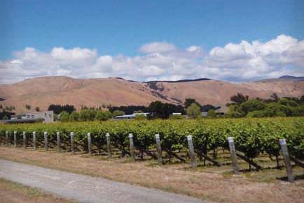 Grava vineyard