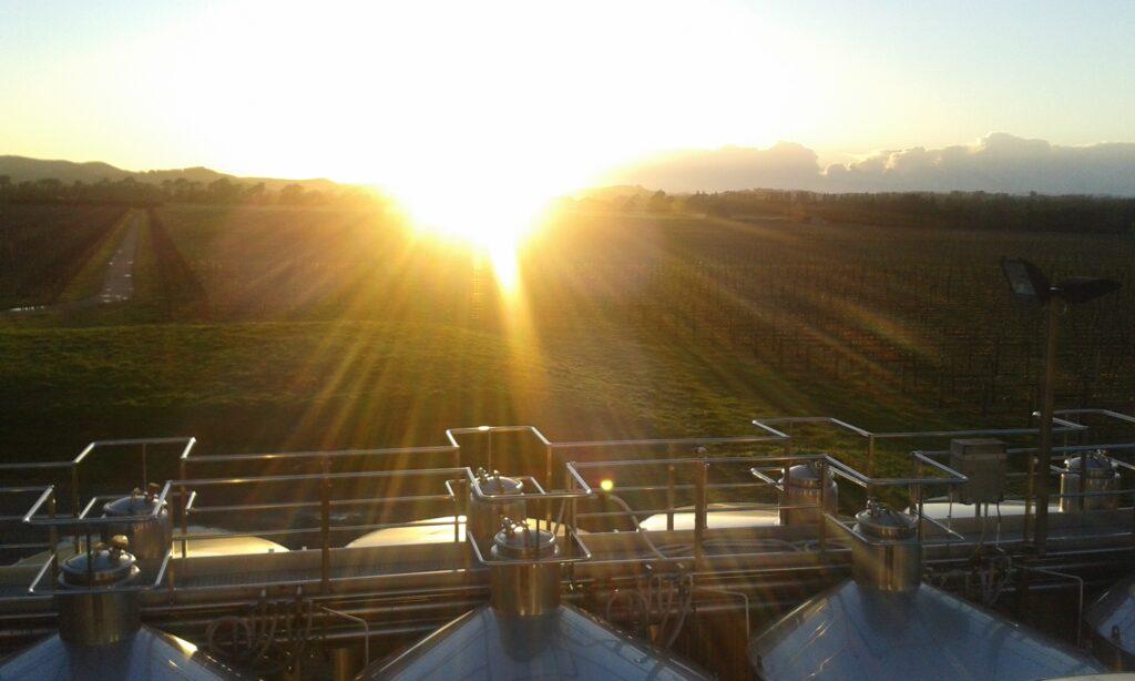 Sunrise at Matahiwi winery