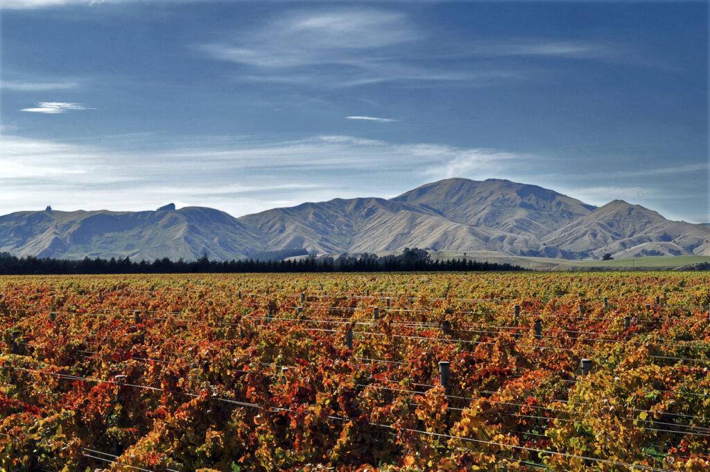 Escarpment vineyards