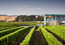 Elephant Hill winery