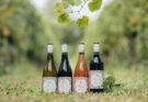 Villa Maria EarthGarden wines