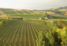 Luna vineyard Martinborough