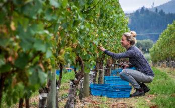 Sophie in vineyard