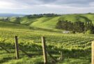 Lime Rock vineyard