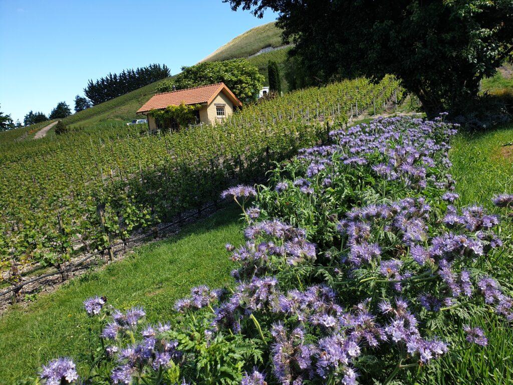 Bell Hill vineyard cottage