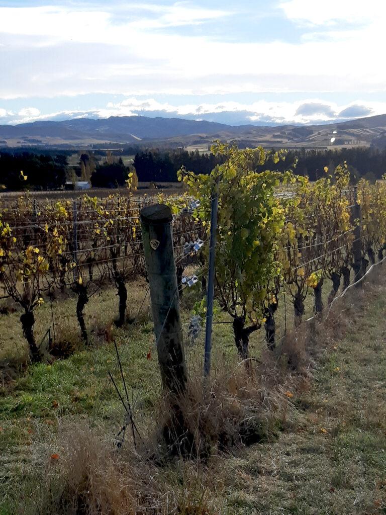 Mountford Vineyard