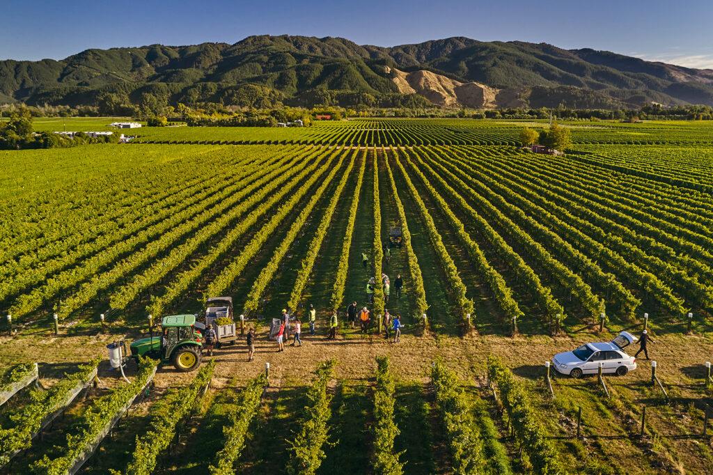 No.1 vineyard