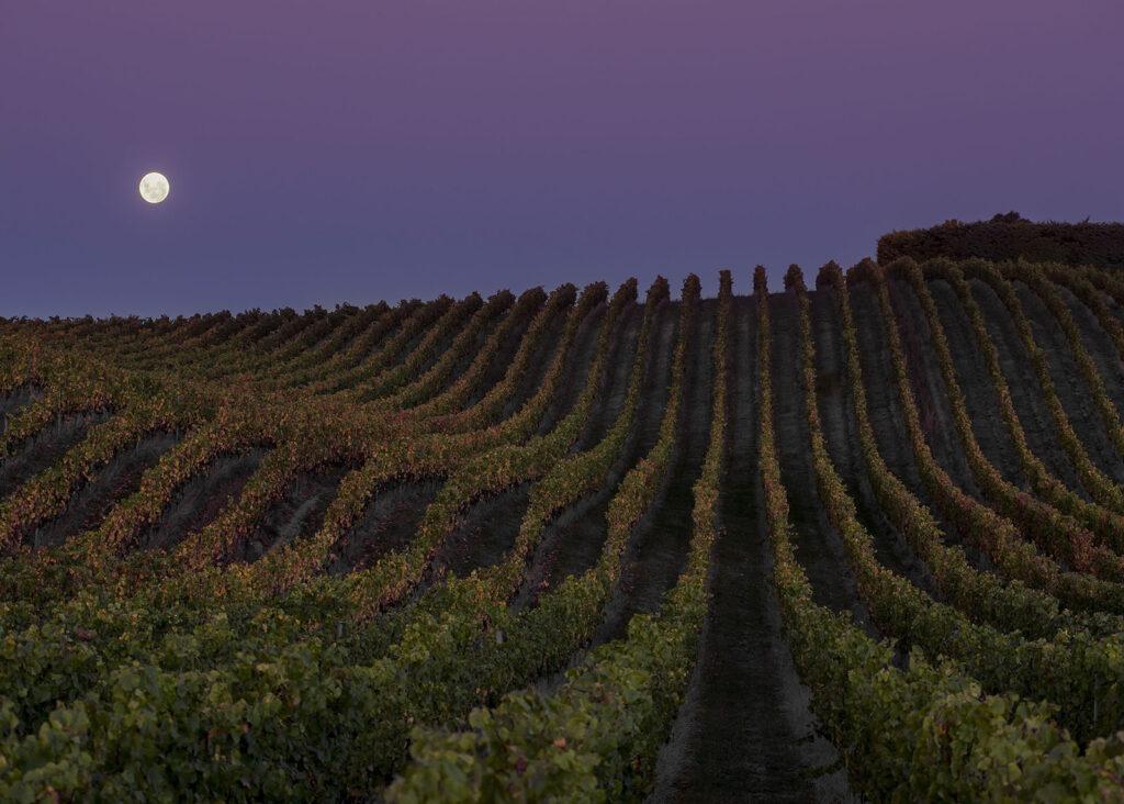 Yarrum vineyard